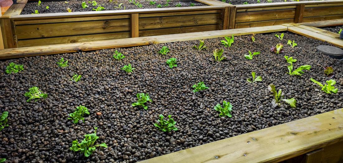 Underground green farming